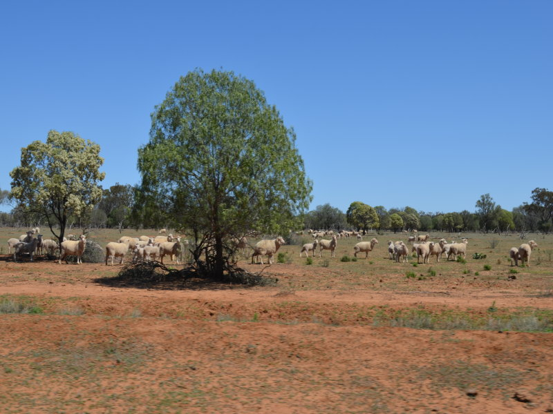 """Glenelg"",, Carinda, NSW 2831"