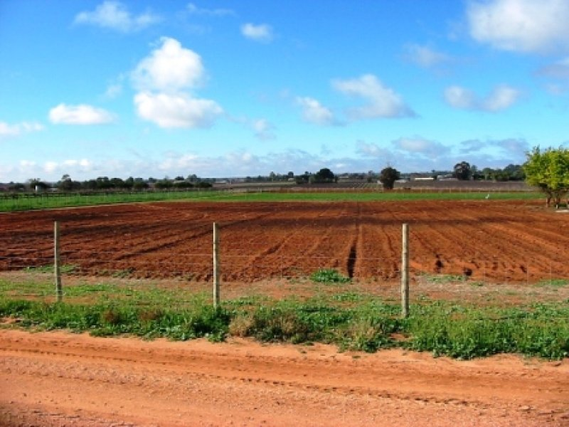 Lot 116 Government Road, Renmark West, SA 5341