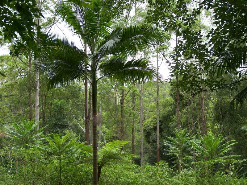 247 Huonbrook Road, Huonbrook, NSW 2482