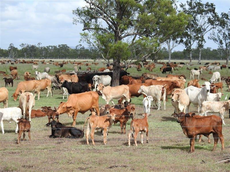 Address available on request, Yaamba, Qld 4704