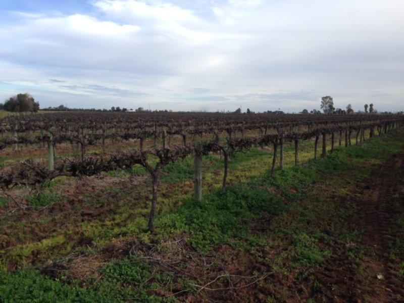 Farm 450 Morely Road, Yoogali, NSW 2680