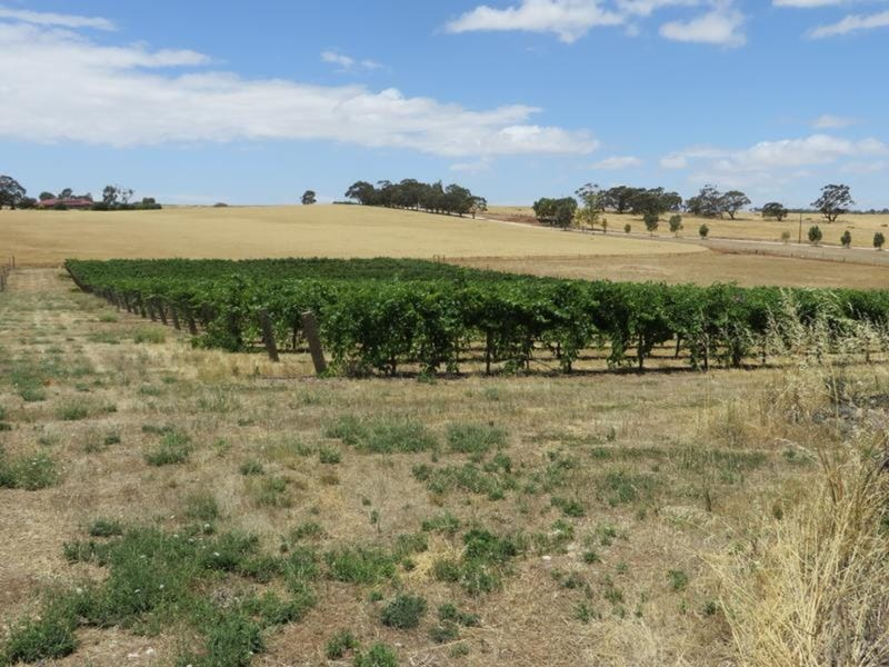 Lot 11 Kingston Terrace, Auburn, SA 5451