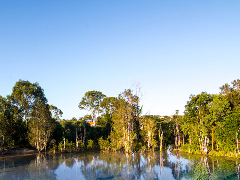 Lot 52, Flame Tree Circuit, Arundel, Qld 4214
