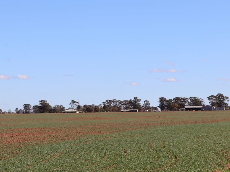 1466 WEST WYALONG CONDOBOLIN RD, West Wyalong, NSW 2671