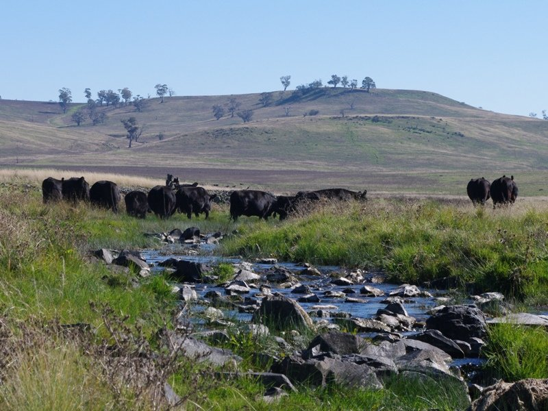 Snowy River Way, Ando, NSW 2631