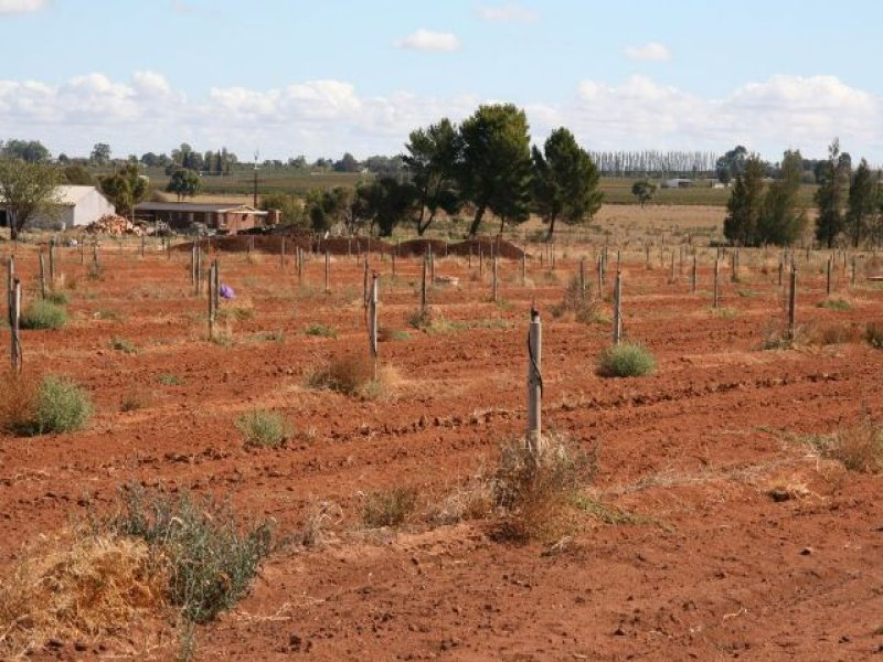 Lot 4 Chowne Road, Loxton North, SA 5333
