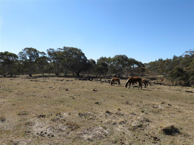 Lot 22 Abington Park Road, Jindabyne, NSW 2627
