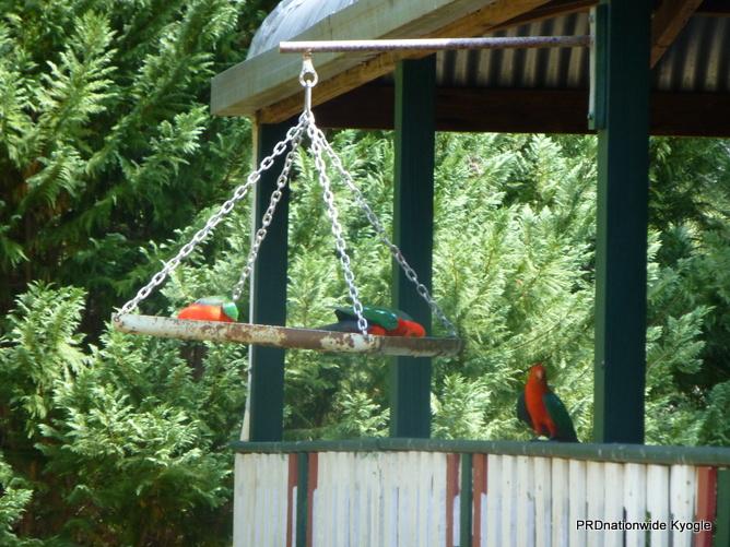 936 Roseberry Creek Road, Roseberry Creek, NSW 2474