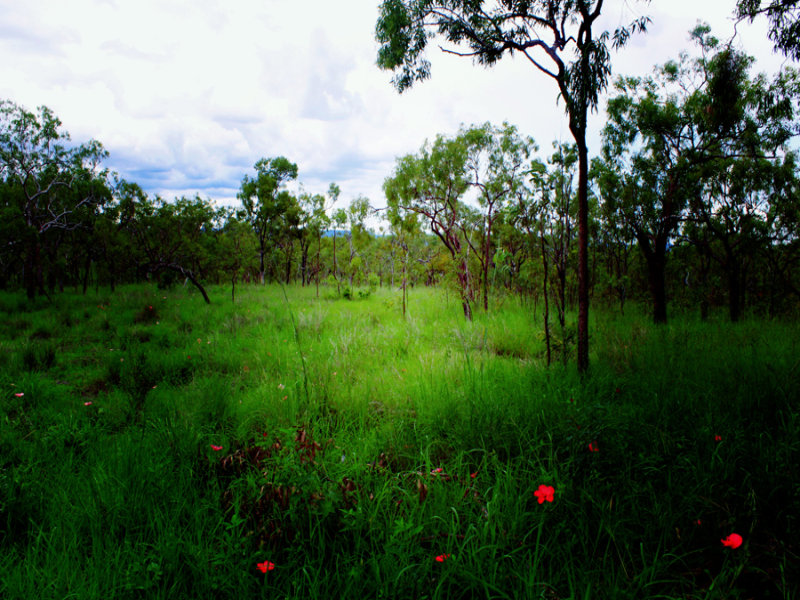 Address available on request, Lakeland, Qld 4871