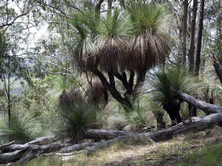 Lot 2, 248 Callaghans Creek Road, Bundook, NSW 2422