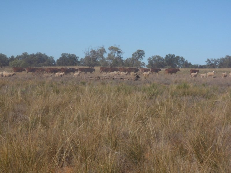 Willotia Station, Menindee, NSW 2879
