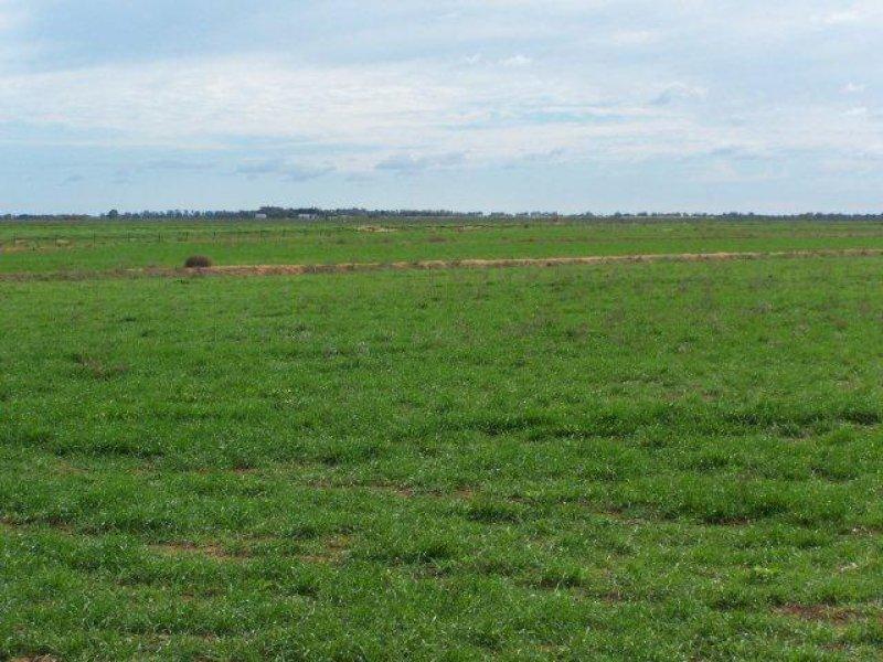 . Farm 572, Coleambally, NSW 2707