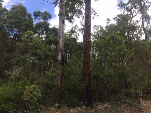 Lot 59 Karri Lane, Quinninup, WA 6258