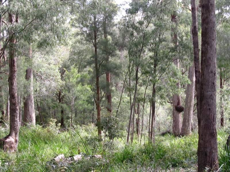 Lot 28 Wattle Valley Close, Walpole, WA 6398