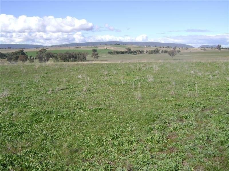 Lot 4 Wirrimah Road, Bendick Murrell, NSW 2803