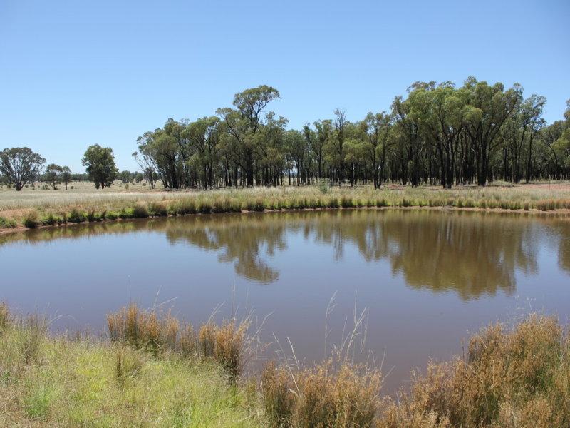 977 Schmidts Lane, Temora, NSW 2666