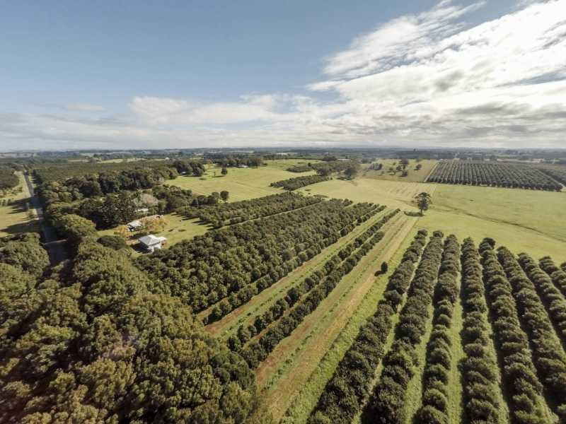 250 Dalwood Road, Dalwood, NSW 2477
