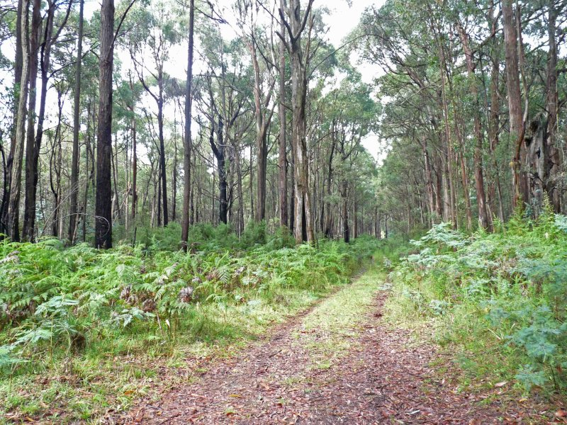 Lot 1 Mansfield Whitfield Road, Whitlands, Vic 3678