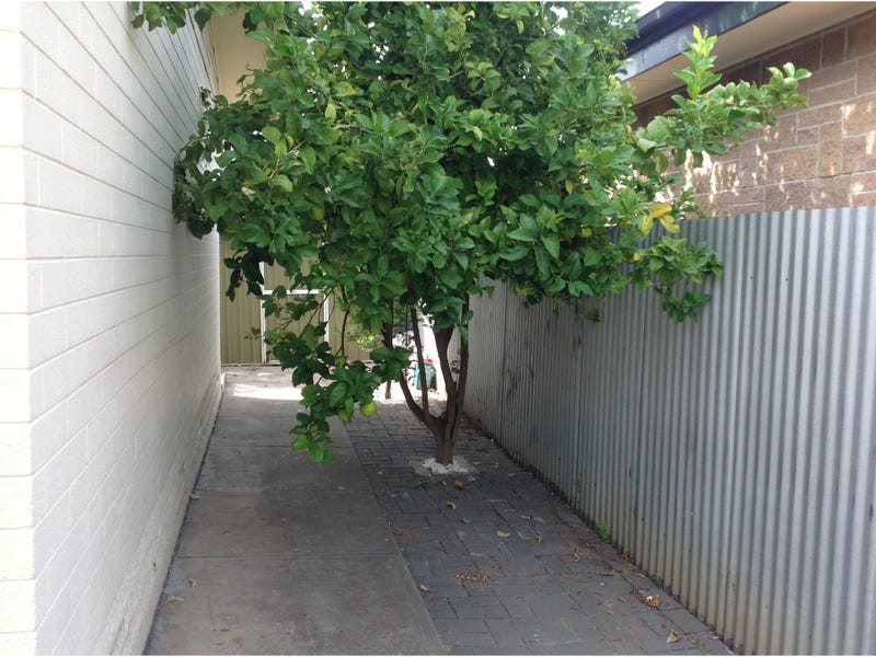 3 6 Lincoln Street Woodville North Sa 5012 Property