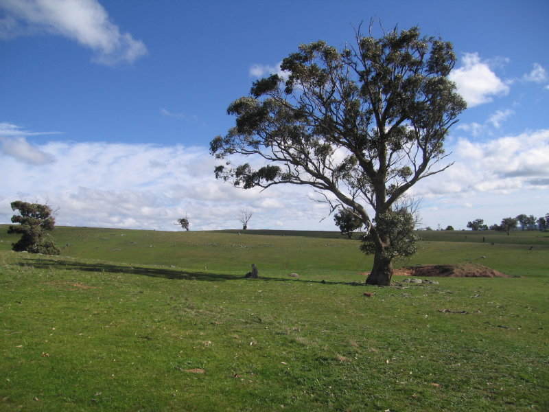 Lot 2 Goughs Range Road, Maldon, Vic 3463