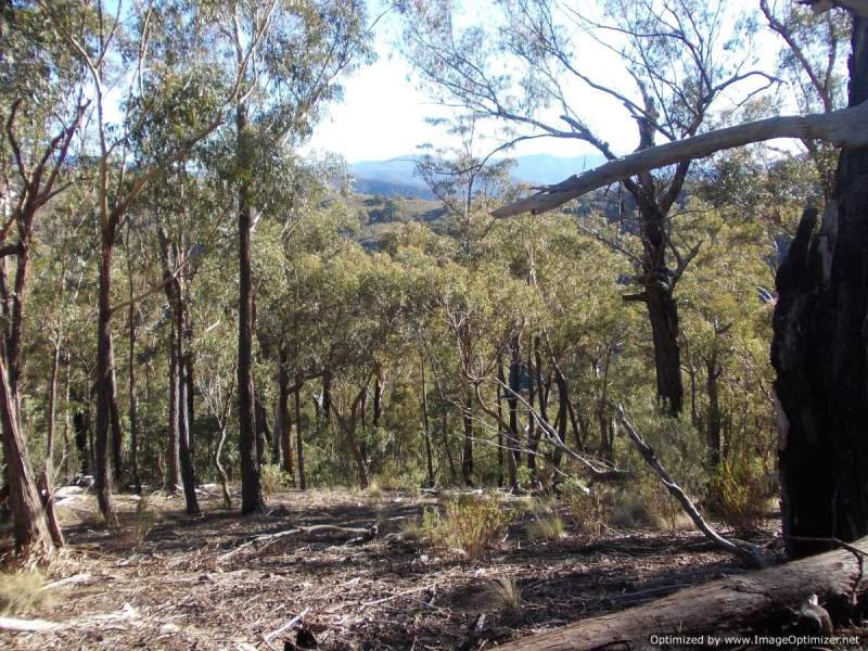 Lot 2 - 1349 Lower Dargo Road, Dargo, Vic 3862