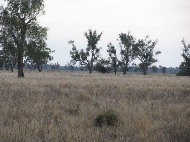 . Lot 3 Wambianna Rd, Warren, NSW 2824