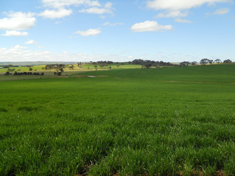 Lot 5, Filed Plan 2703 In the Area Named Bagot Well, Kapunda, SA 5373