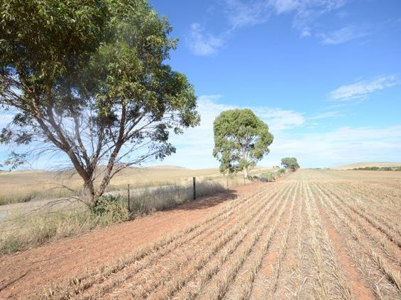 Lot 446 Carmody Road, Leighton, SA 5417