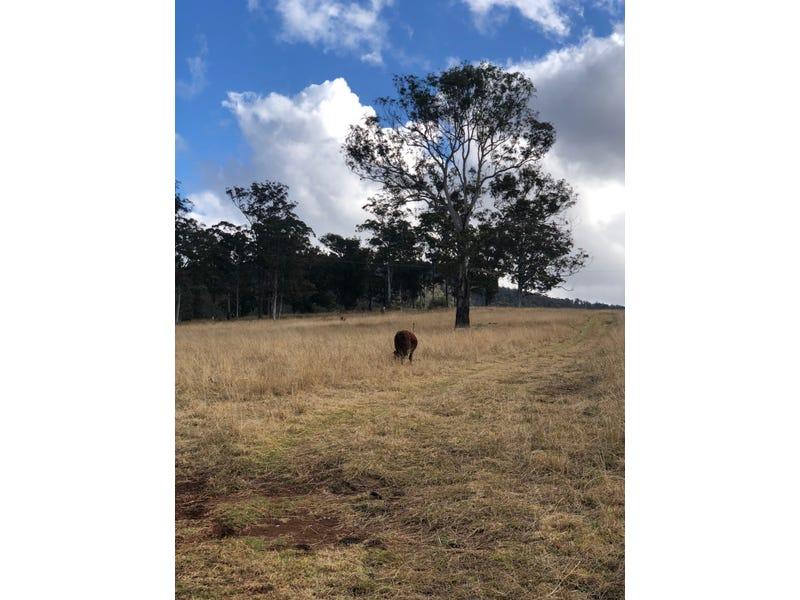 191 SHEEPSTATION CREEK ROAD, Dorrigo, NSW 2453