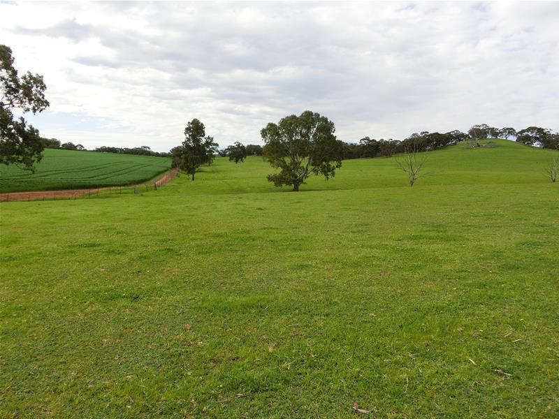 Allotment /302 Krieg Road, Seppeltsfield, SA 5355