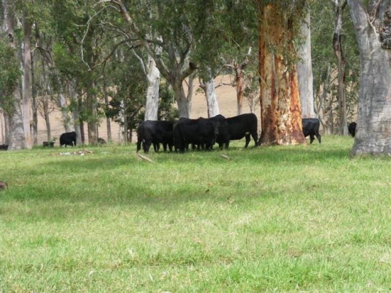 Tooloom Road, Urbenville, NSW 2475