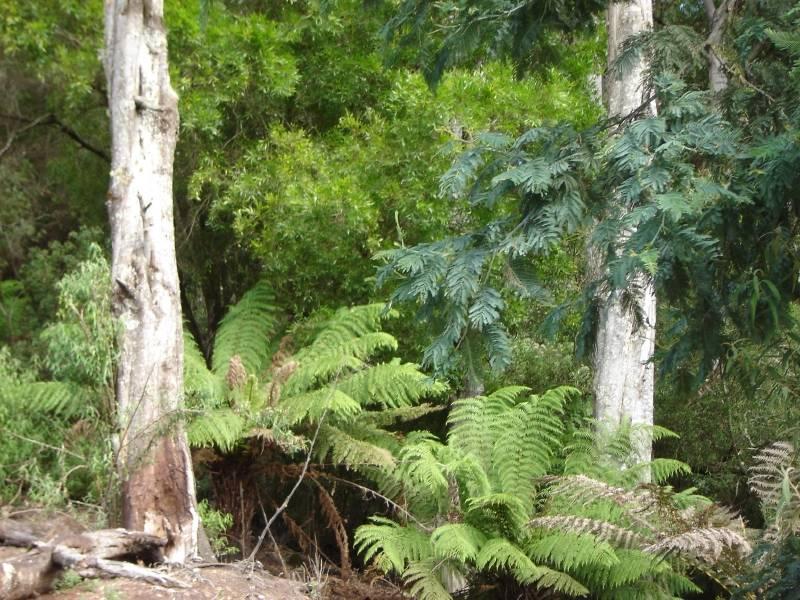 PID 6798789 Lottah Road, Lottah, Tas 7216