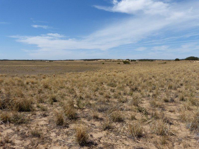 245 Mallee Hills Road, Lameroo, SA 5302