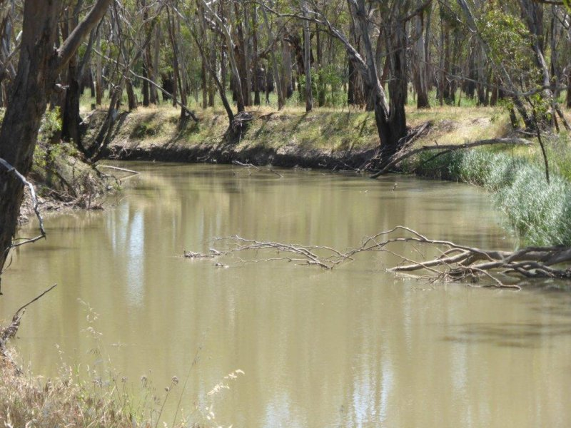 Albion Grove Sturt Highway, Narrandera, NSW 2700