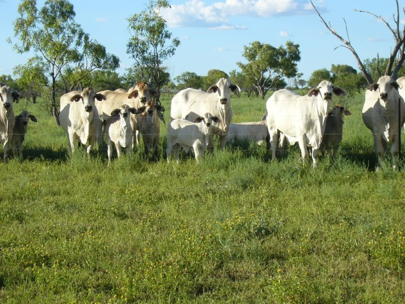 """ MONS "", Isisford, Qld 4731"