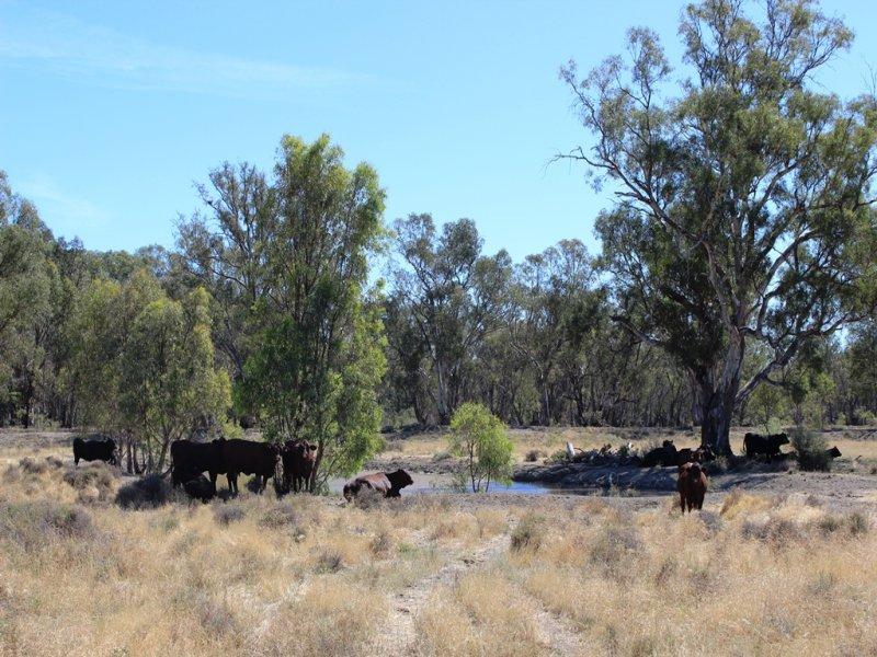 11 Felton Drive, Murray Downs, NSW 2734