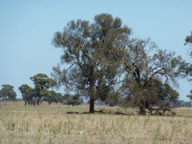 Lots 1 and 2 Garvagh Road, Bunnaloo, NSW 2731