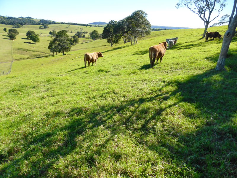 Lot 12, Binna Burra Road, Beechmont, Qld 4211