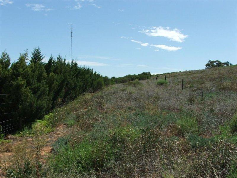 19 Murtho Road, Paringa, SA 5340