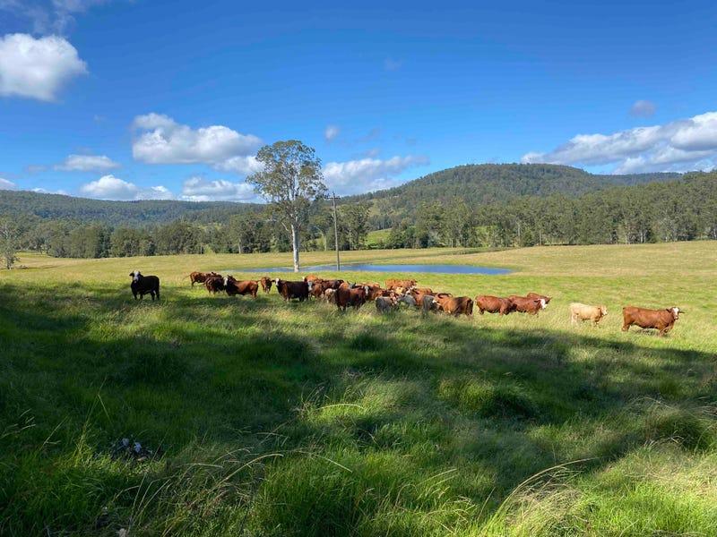 """Booroo"", 3164 Kangaroo Creek Road, Kangaroo Creek, NSW 2460"