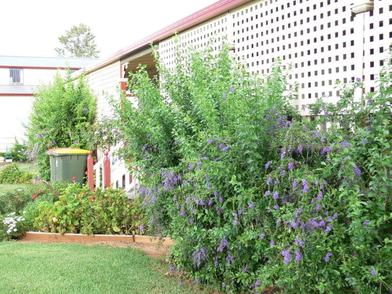 15 Willbe Street, Eugowra, NSW 2806