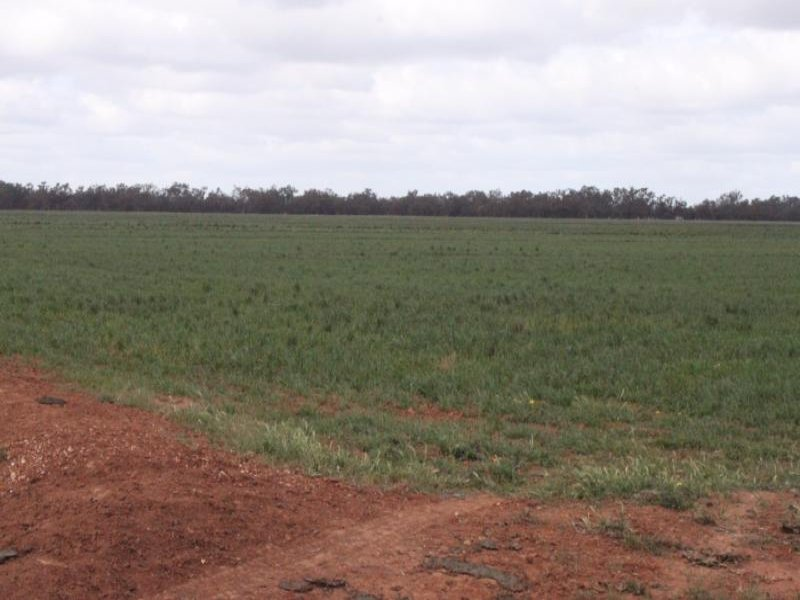 Lot 60 Parkes Rd, Condobolin, NSW 2877
