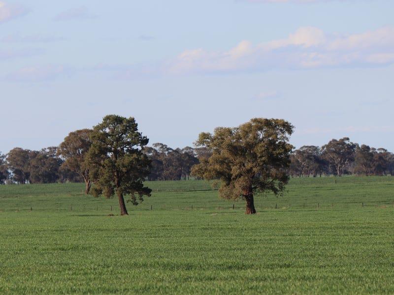 795 Younga Plains, West Wyalong, NSW 2671