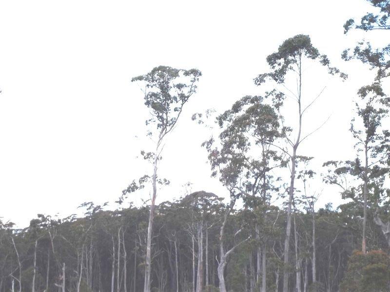 Calder Gully Road, Mangana, Tas 7214