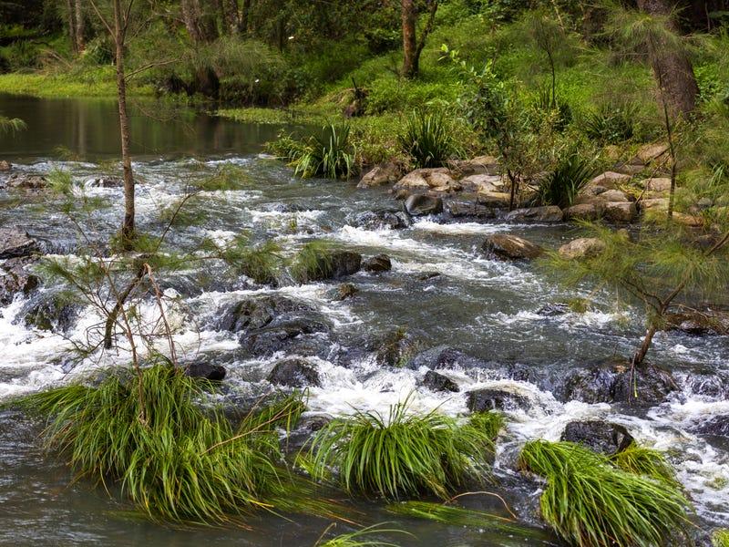 1115 Bowman River Road, Bowman, NSW 2422