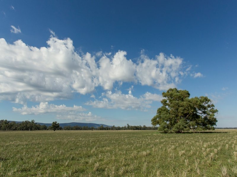 Springview -  129 Loch Lomond Road, Gooloogong, NSW 2805