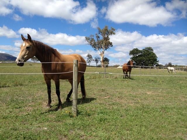 45 Grevillea Grove, Rylstone, NSW 2849