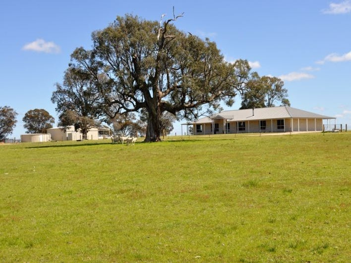 593 Spring Creek Road, Gulgong, NSW 2852
