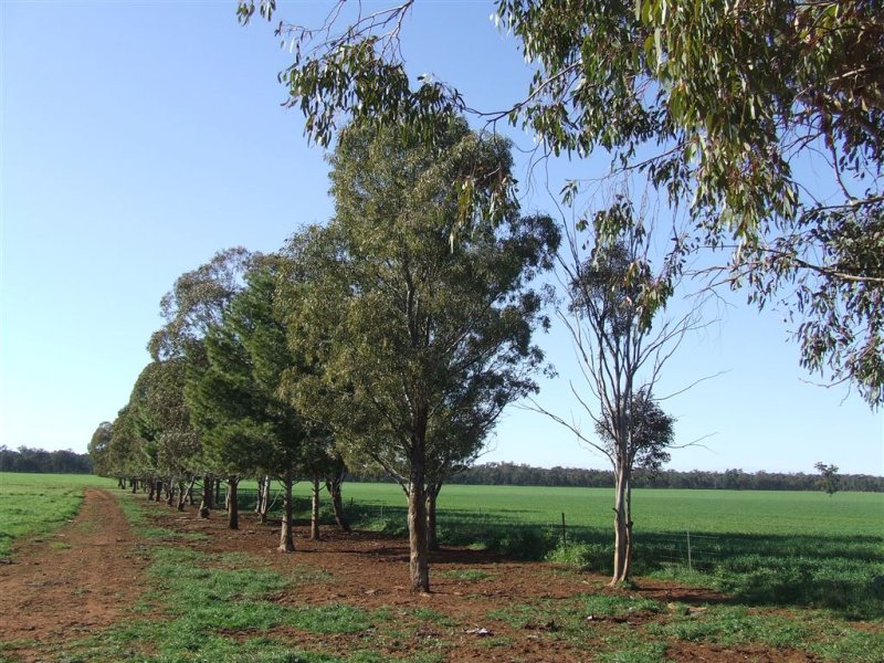 """AFTON"" 323 Donaldson's Road, Narrandera, NSW 2700"
