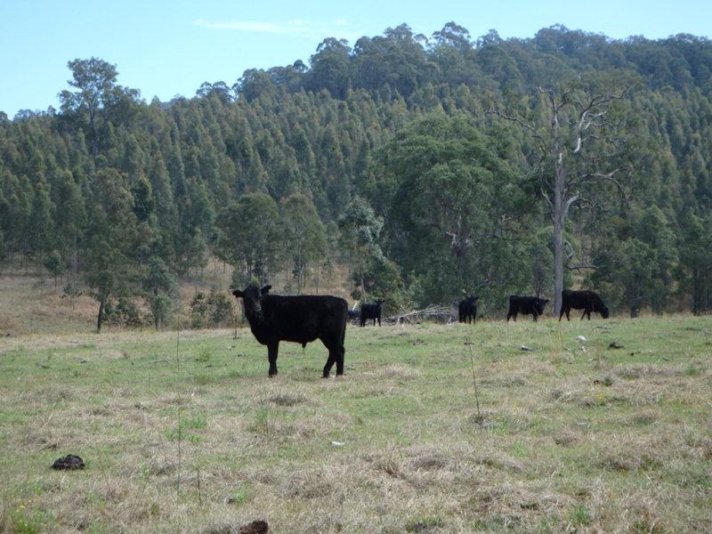 624 Tabulam Road, Lower Bottle Creek, NSW 2469